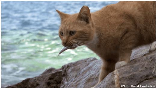 ギリシャの島で暮らす猫