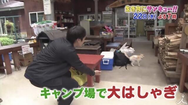 看板ネコがいるという栃木県那須高原のキャンプ場