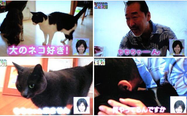 猫を4匹飼っている竹内薫さん