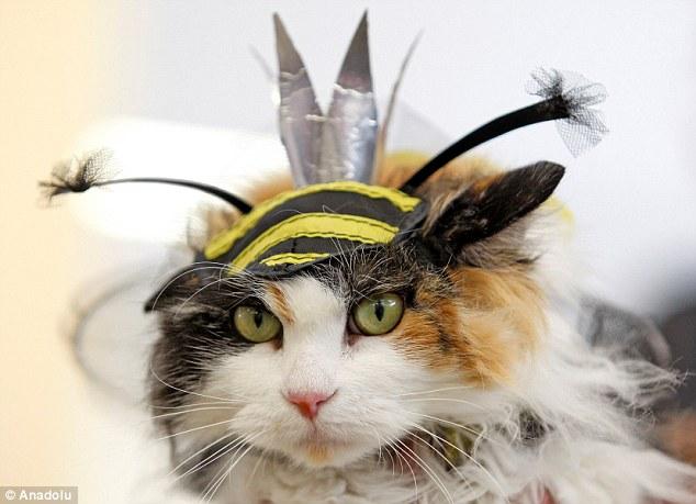 ミツバチの着包みを被った三毛柄の猫