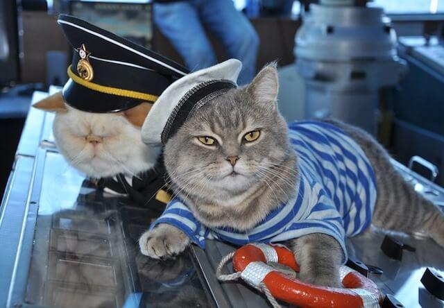 猫の「船長」と「水夫」