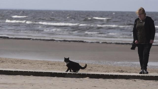 バルト海へお散歩するネコ