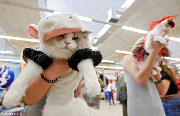 早く帰りたい猫