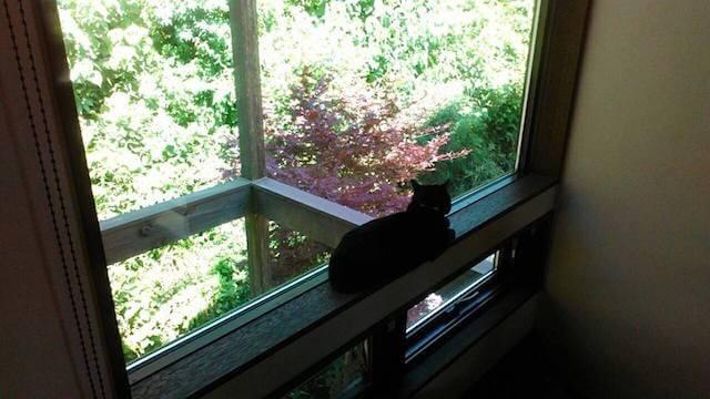 窓からバードウォッチングする猫