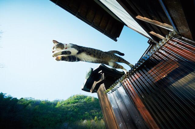 猫寺で暮らす猫の写真3