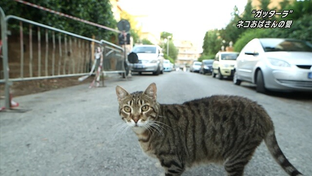 番組に登場する猫1
