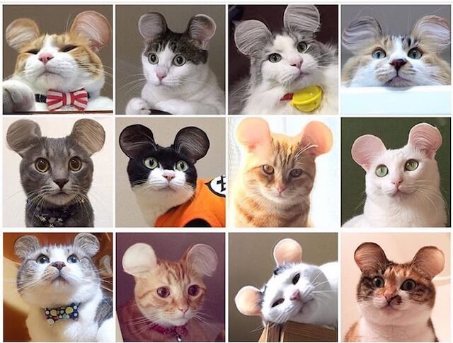 サイメラ(Cymera)を使ったネズミ耳の猫たち