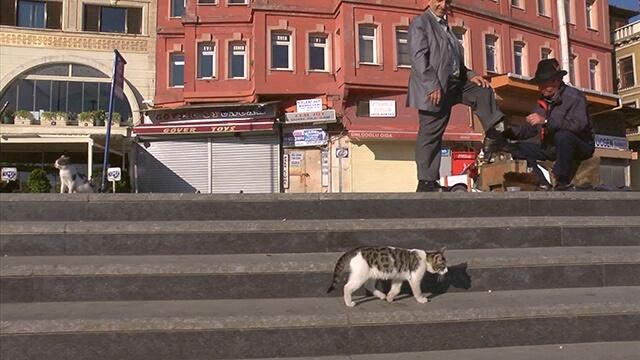 番組に登場する猫3