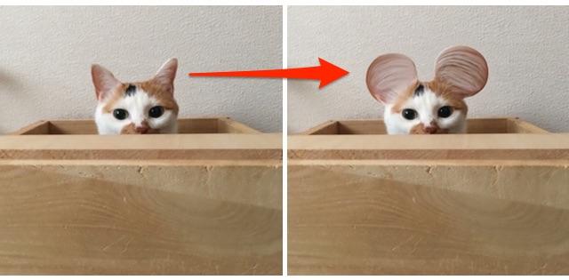 猫が丸耳になるまでのビフォー・アフター
