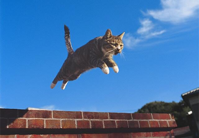 岩合光昭さんの猫グッズ、全国のロフトにて期間限定で発売中