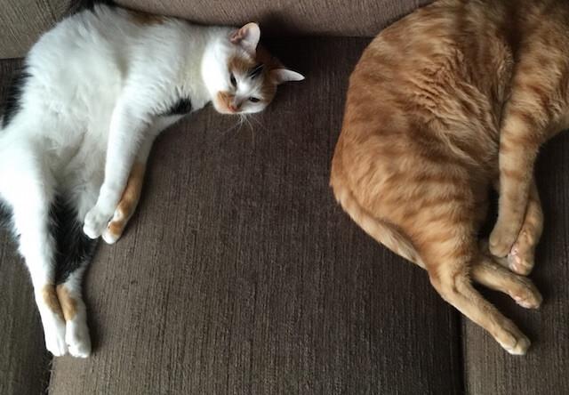 同じポーズをする猫 - 猫の写真素材