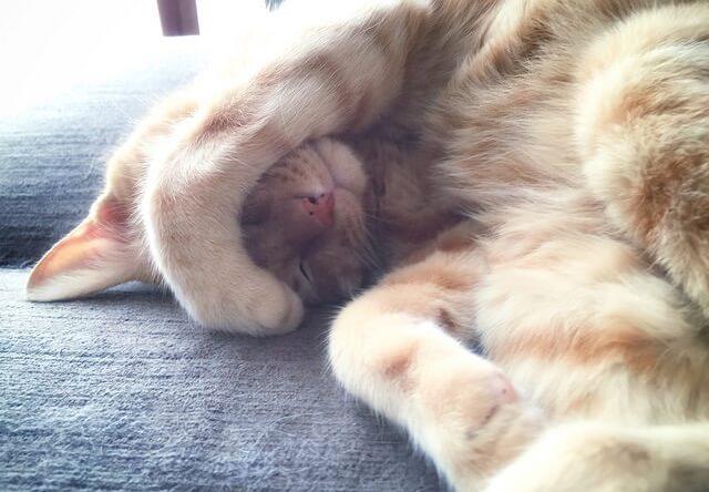 眩しそうな茶トラ - 猫の写真素材 | Cat Press