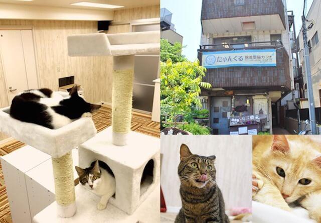 鎌倉と桜木町で猫の譲渡会、7/16から3日連続で開催