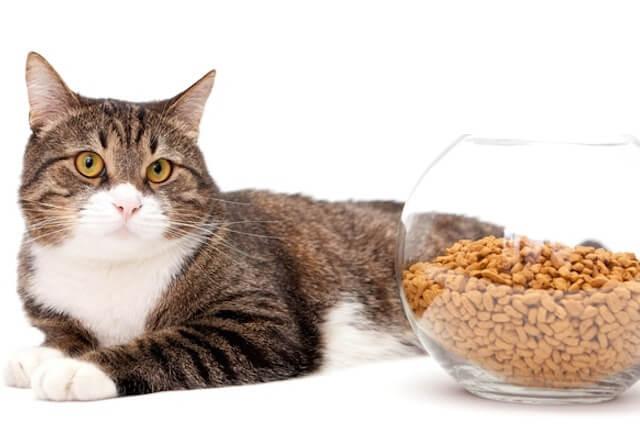 猫の飼育に関するアンケート結果をアイペット損保が公表