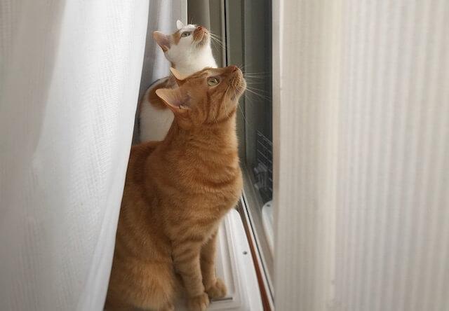 獲物を見つけた2匹の猫 - 猫の写真素材