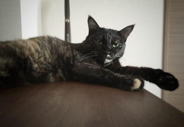 不審者を見る目 - 猫の写真素材