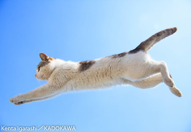 「飛び猫」の写真家・五十嵐健太さんが7/31まで写真展を開催