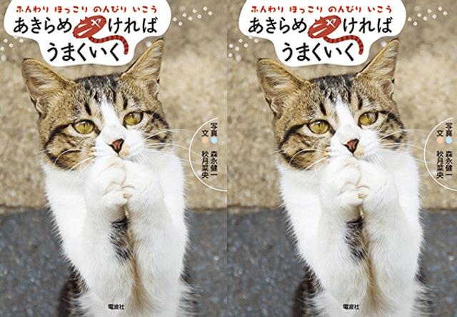 本日7/23発売、ネコ写真集「あきらめニャければうまくいく」