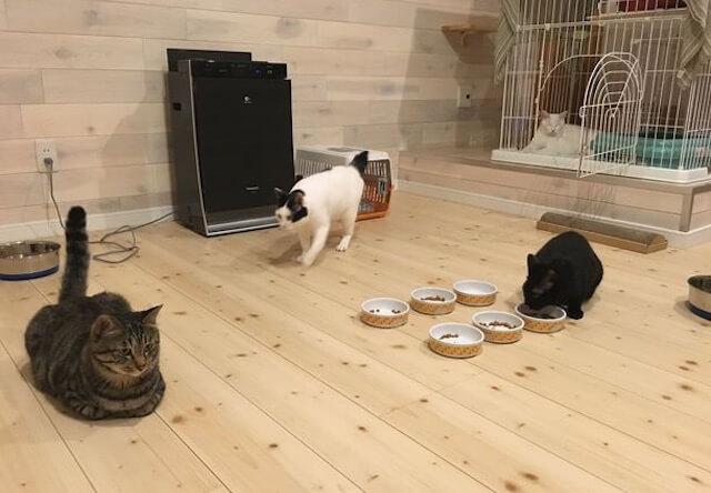 福井県の郡山市に保護猫カフェ「ここねこ」
