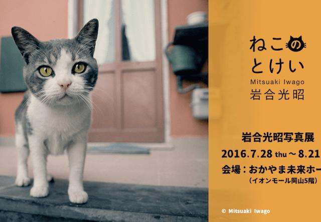岩合光昭ミニ写真展「ねこのとけい」、7/28-8/21に岡山で開催