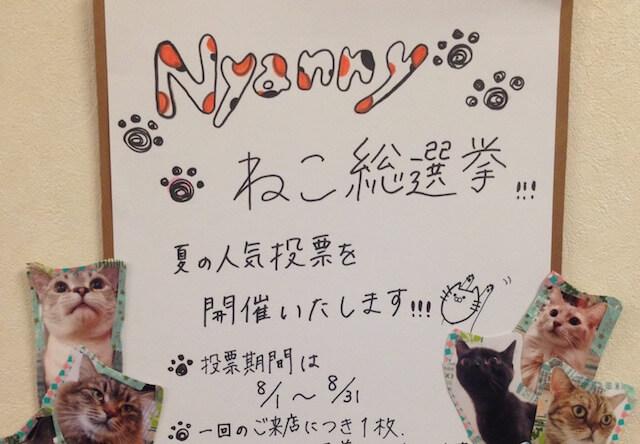 神戸の猫カフェニャニー、8末まで人気猫の総選挙を開催中