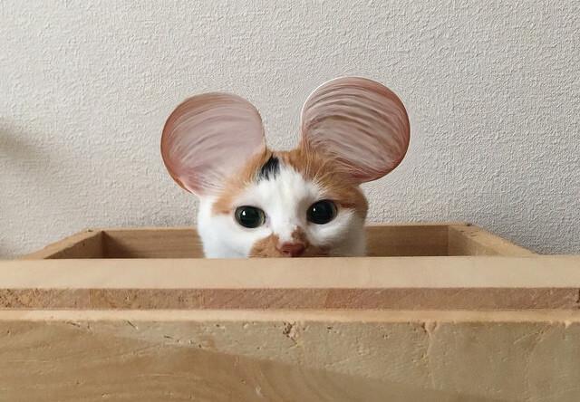 ミッキーマウスのような耳 – 猫の写真素材