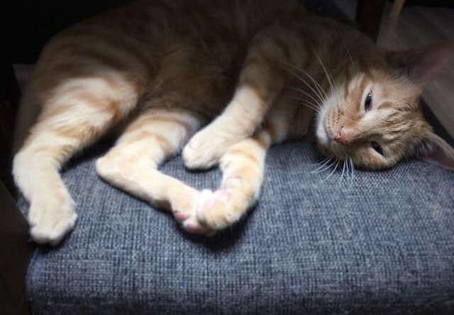 うっとり顔の猫 - 猫の写真素材