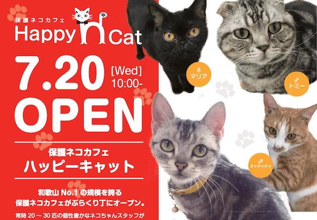 和歌山のぶらくり丁商店街に保護猫カフェ「ハッピーキャット」が開店