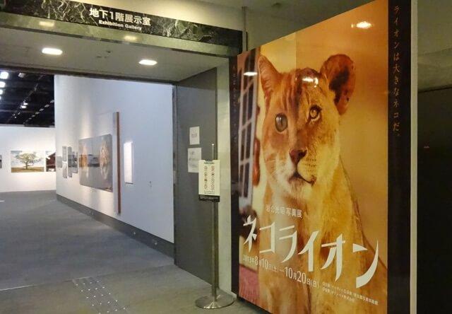 ネコライオン 展示会場イメージ