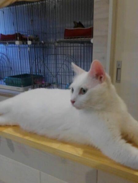 保護猫カフェ「ここねこ」の写真1