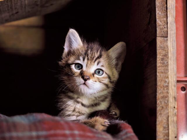 「ふるさと」津軽の猫写真1