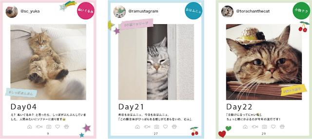 31cats ニャンとも愛しい毎日 写真イメージ