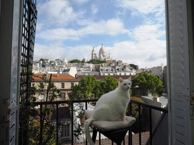 世界ネコ歩き写真展 パリの猫