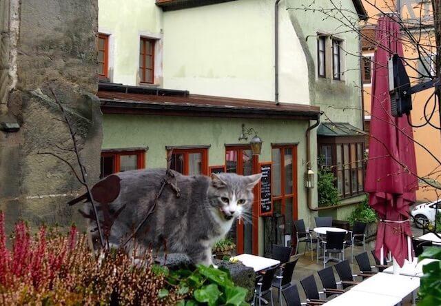 ロマンティック街道沿いの猫1
