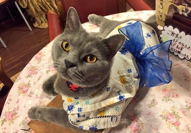 着物・浴衣姿の猫1