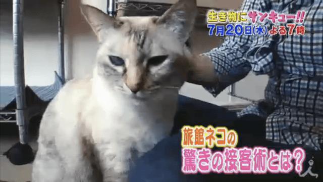 お客さんを幸せにするスゴイ特技を持ったネコ