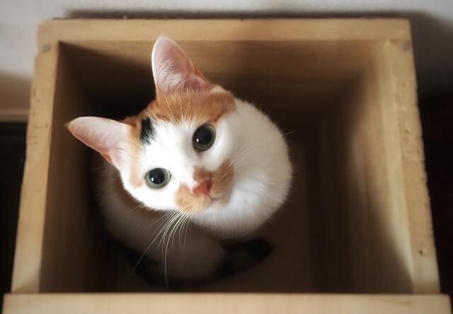 箱の中から見上げる猫 - 猫の写真素材