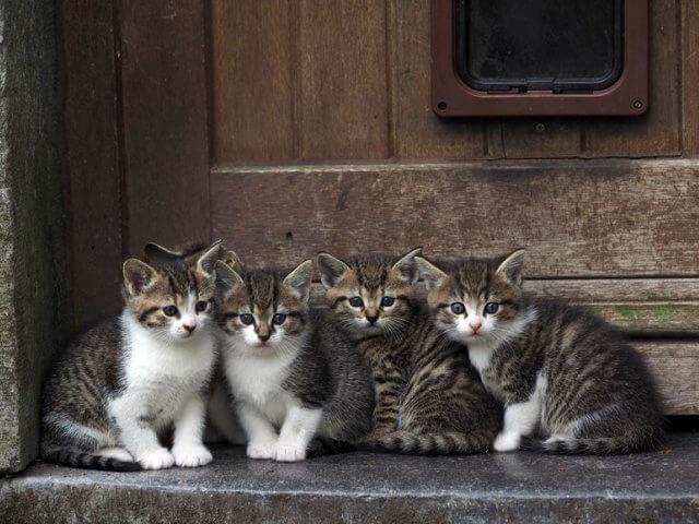 ベルギーの猫