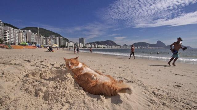 美しいビーチで寝そべるネコ