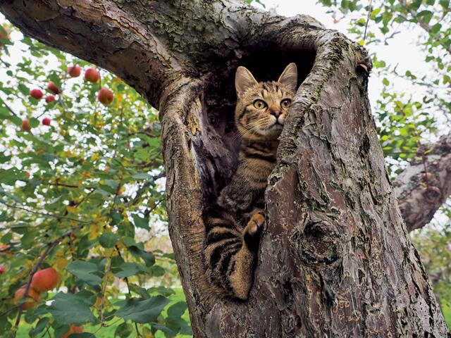 「ふるさと」津軽の猫写真5