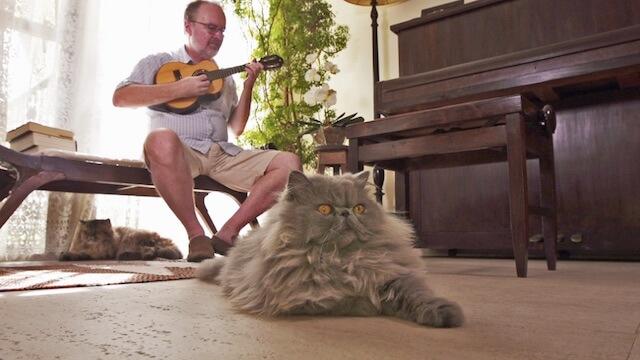 リオデジャネイロの陽気で優しい人々に愛されるネコ