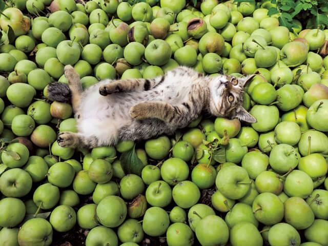 「ふるさと」津軽の猫写真6