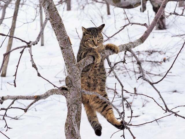 「ふるさと」津軽の猫写真7