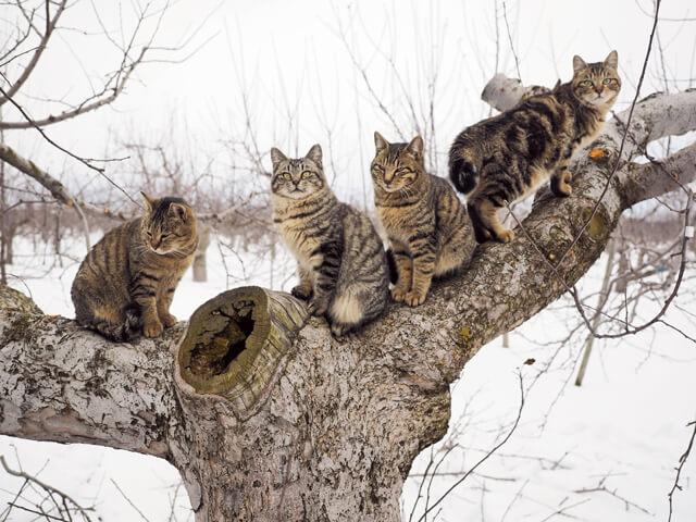 「ふるさと」津軽の猫写真8
