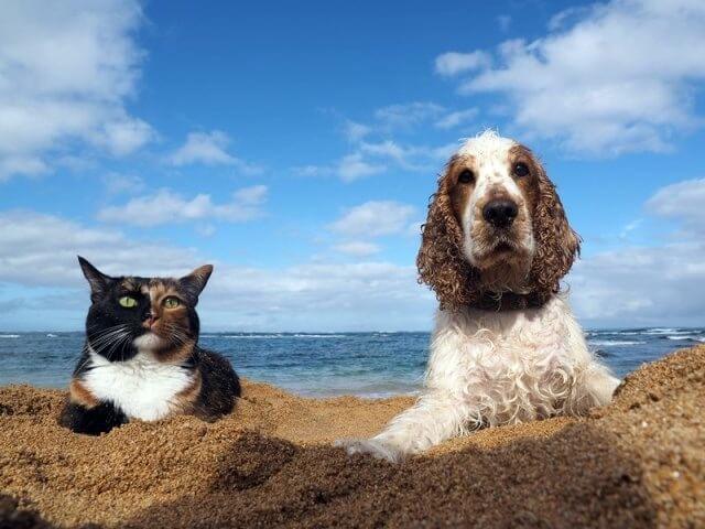 ハワイの猫 by 写真展「岩合光昭の世界ネコ歩き」