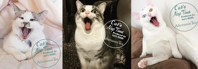 あくびネコの写真展