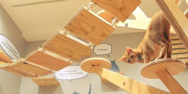 楽しみながら猫助け ネコリパブリック