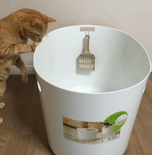 「上から猫トイレ」に入ろうとする茶トラ