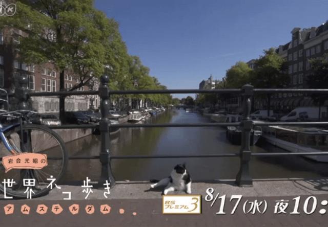 岩合光昭の世界ネコ歩き アムステルダム