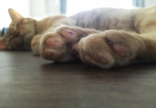 茶トラの肉球 - 猫の写真素材